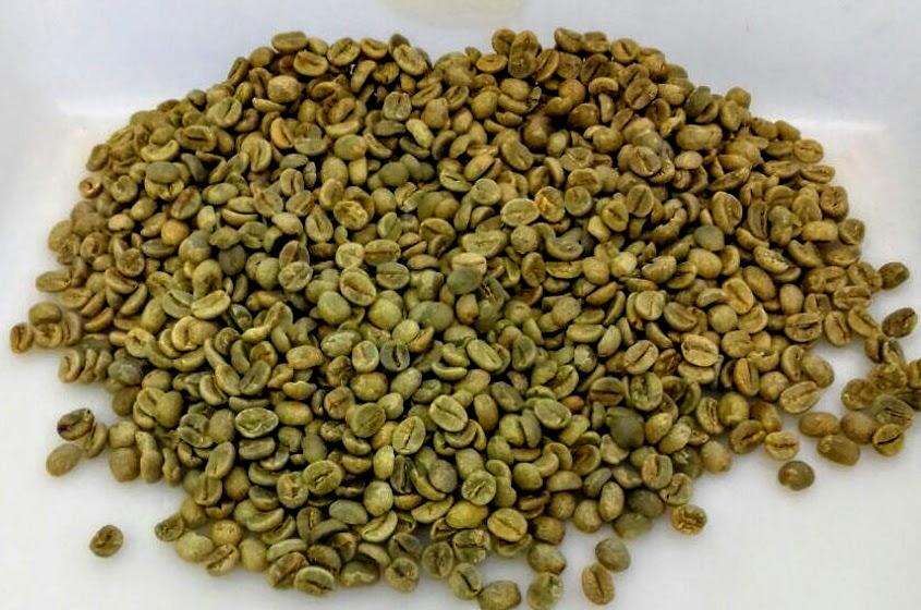 Sementes, grãos, mudas e outros materiais exportados (I)
