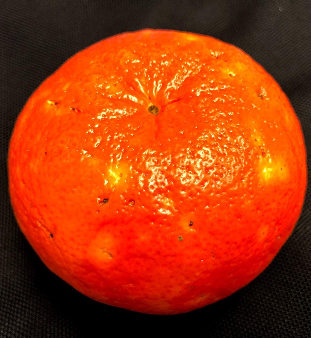 Mancha de Alternaria em fruto de tangerina Clemenville