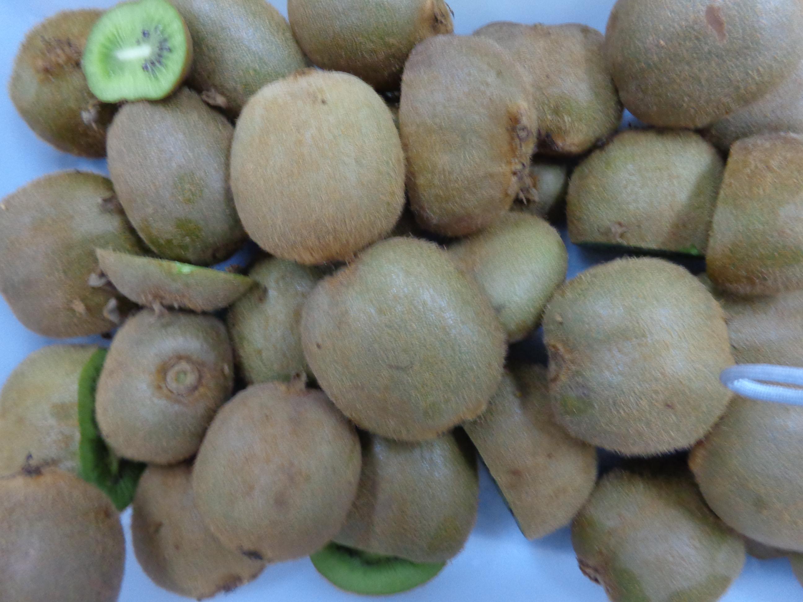 Kiwi importado do Chile com ácaro quarentenário