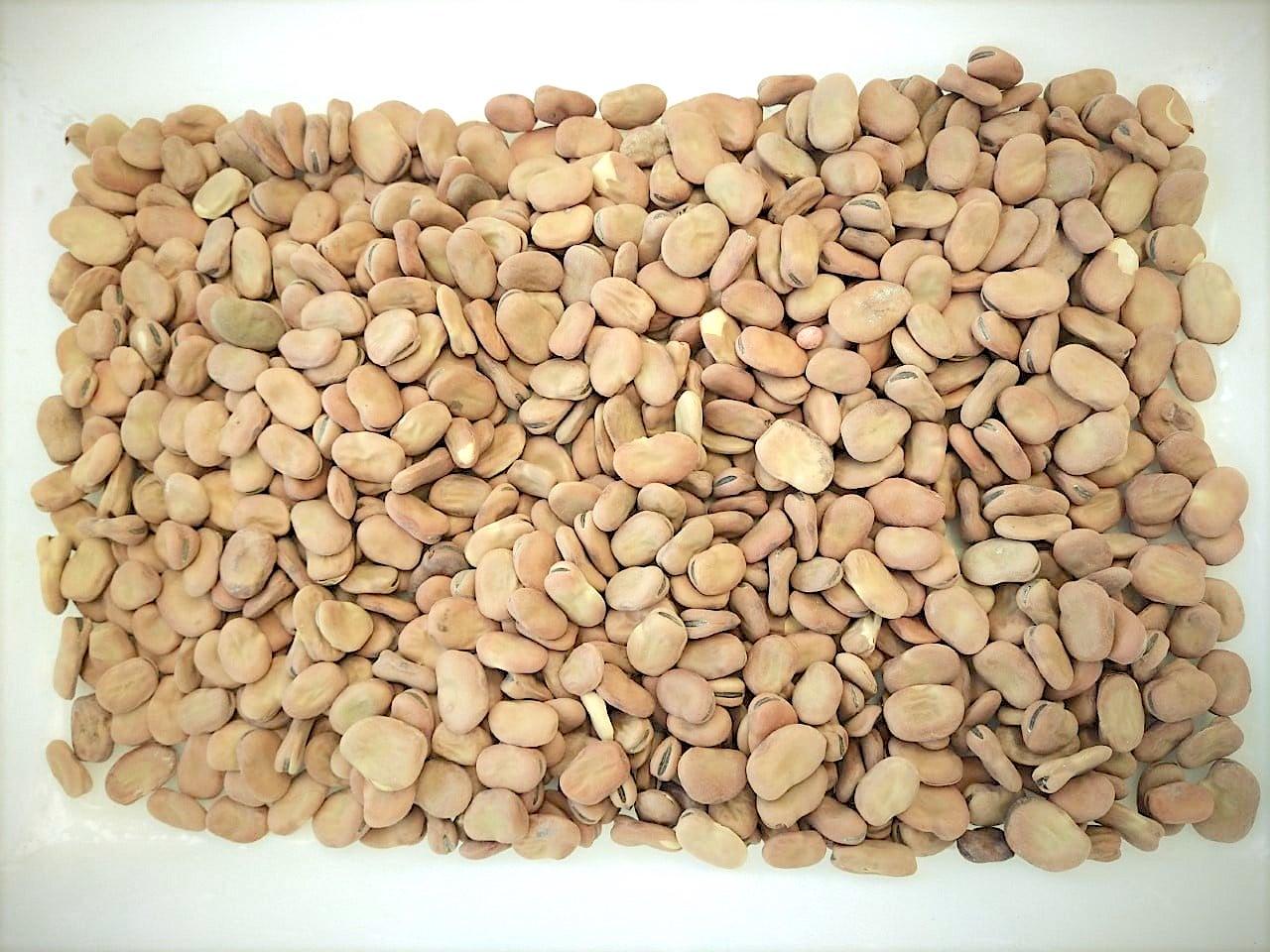 Importação de sementes de feijão-fava da Itália