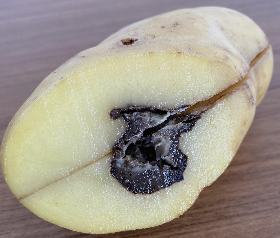 Coração-Negro da Batata / Blackheart of Potato