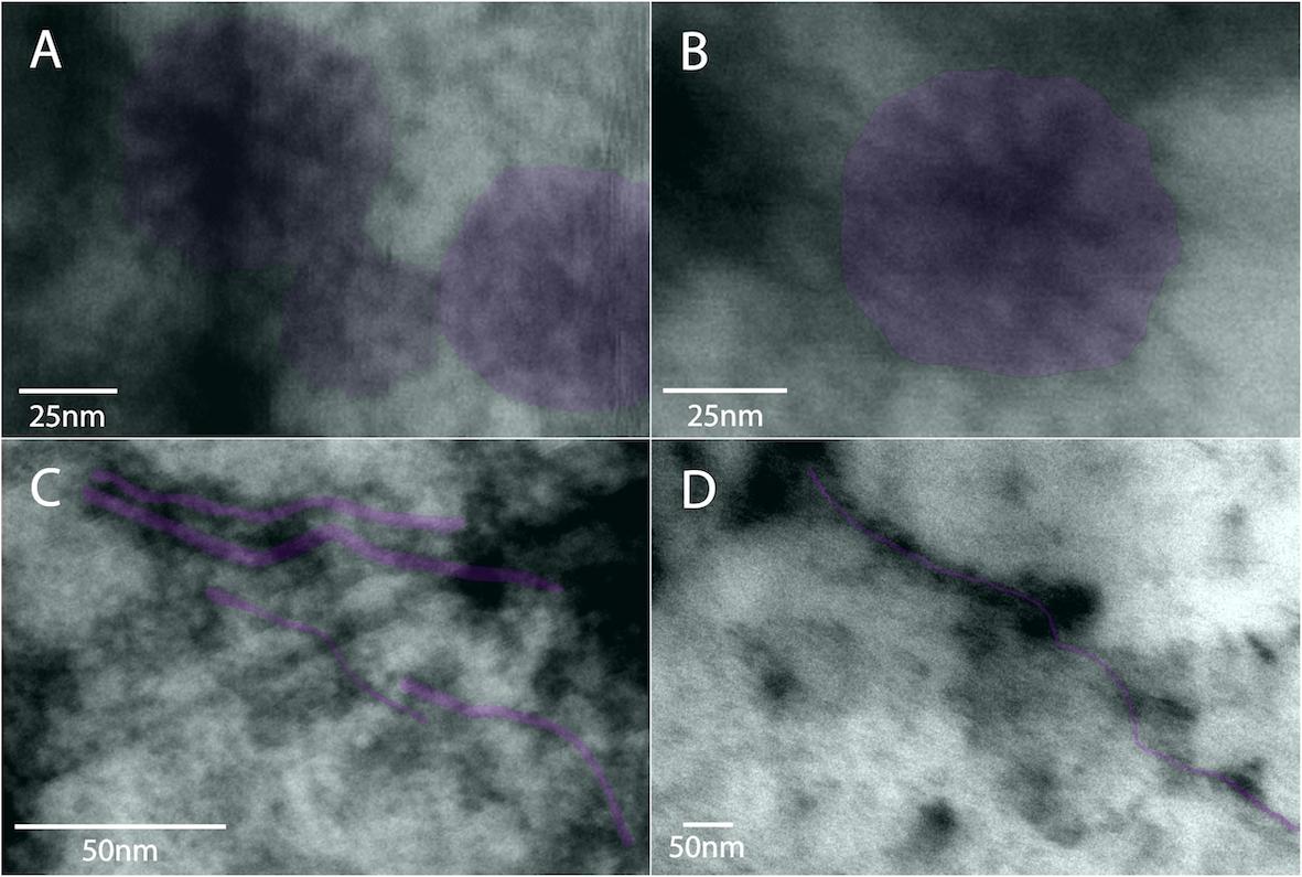 Partículas isométricas de Papaya Meleira virus e alongadas de Papaya ringspot virus