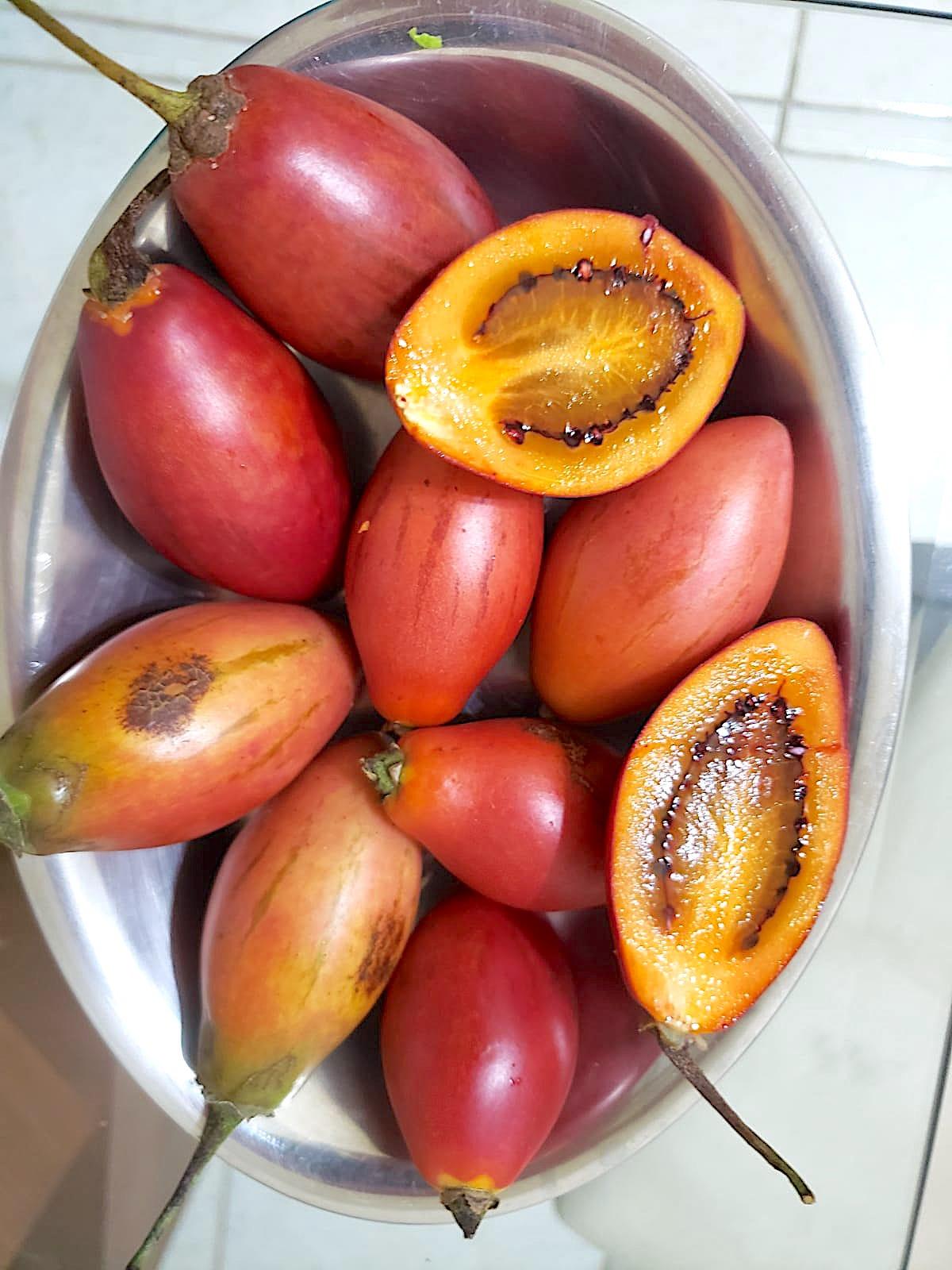 Solanum betaceum em Guaporé, RS